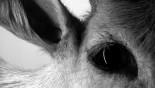 Un film de Yann Romann Grilly. Documentaire de création – 38 min – 2011 – HD – 16/9 – noir […]